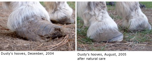 Natural Hoof Articles Donkeys